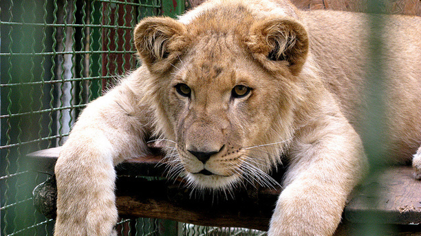 Animal Activists Urge End to Late Night Zoo Parties-- Seriously