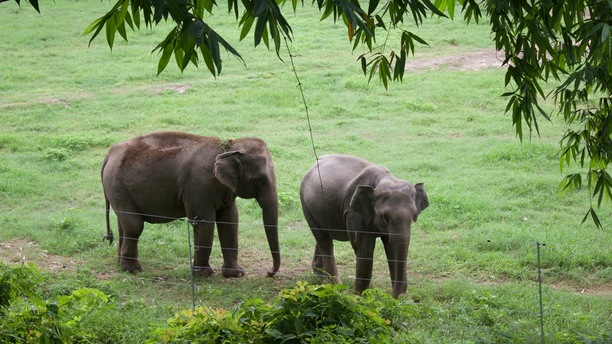 We all love elephants, so why can't we ride them?