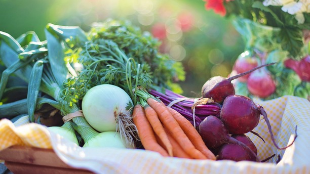 Things You Can Do Now to Prep Your Organic Garden for Spring